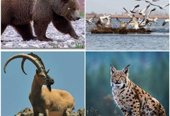 تعریف 7 سایت گردشگری حیات وحش در اردبیل